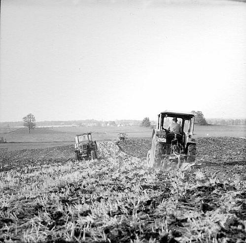 Landwirtschaftliche Produktionsgenossenschaft Berbisdorf, Höhne, Erich/Pohl, Erich, 1966