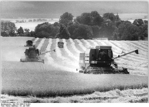 ADN-ZB Hiekel 19.7.86-Ge.-Bez. Dresden: Ernte. Jede Stunde des sommerlichen Wetters nutzen die Genossenschaftsbauern gegenwärtig zur Ernte des Getreides. Auch auf den Feldern der LPG Pflanzenproduktion Grenzland in Langburkersdorf sind die Mähdrescher bei der Wintergerstenmahd.